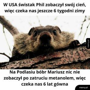 Bóbr Mariusz