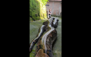 Zaklinacz węży