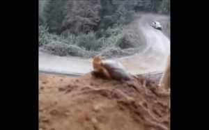 Zaskoczony ślimak