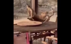 Walka w barze
