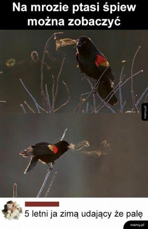 Ptasi śpiew