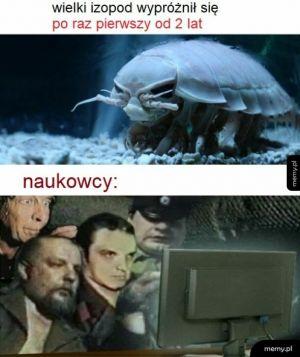 Duży robak ułożył klocka