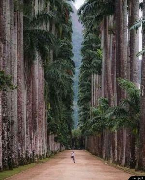 Niesamowity park w Rio de Janeiro