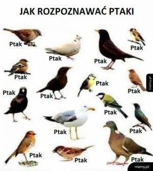Skrócony kurs ornitologii