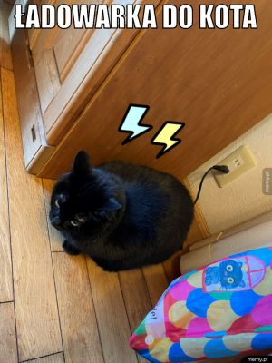 Ładowarka do kota