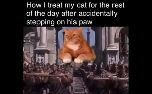Kot jak król
