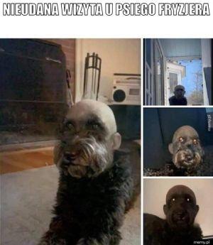 Psi fryzjer