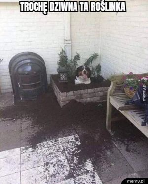 Nietypowa roślinka