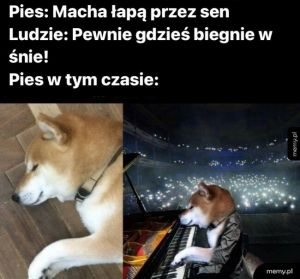 Pies we śnie
