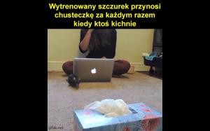 Przydatny szczurek