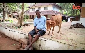 Najmniejsza krowa na świecie