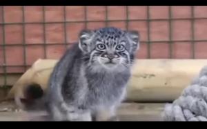 Kotełek Cię obserwuje, miej się na baczności.