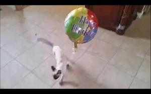 """""""Kocham mój balonik i wszędzie go zabieram."""""""