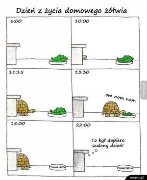 Dzień z życia żółwia