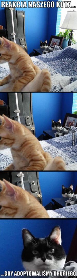 Reakcja naszego kota...