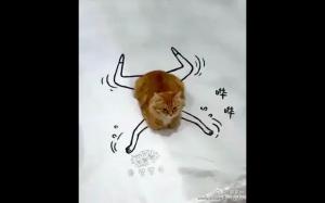 Bardzo aktywny kot