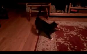 Jak strollować kota