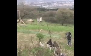 Fido, latający pies!