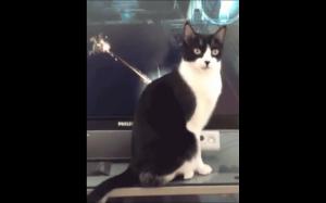 Nieśmiertelny kot