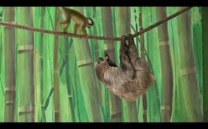 Miły leniwiec dzieli się jedzeniem