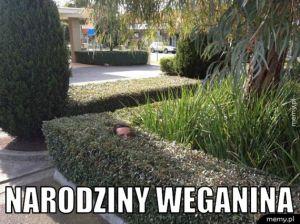 Narodziny weganina