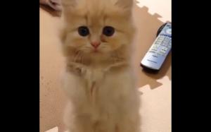 Kotek prosi o mleko