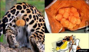 Cheetosy