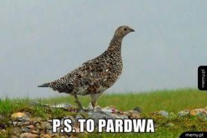 Pardwa