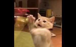 """""""Daj mi to człowiek!"""""""