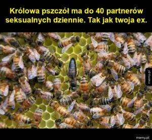 Królowa pszczół