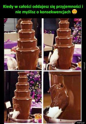 Papuga i tort