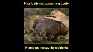 Hipcio