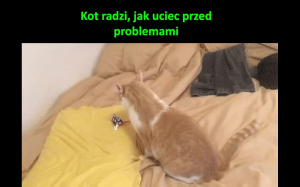 Koteł radzi