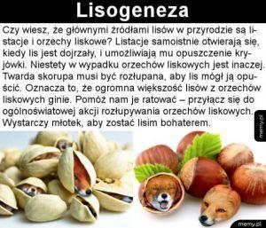 Lisełki