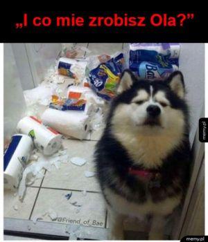Co zrobisz temu psu?