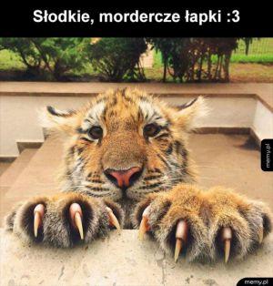 Chyba widziałem tygryska