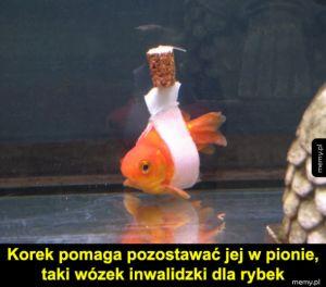 Wózek dla rybek