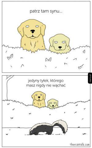 Psie rady