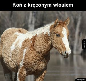 Taki dziwny koń